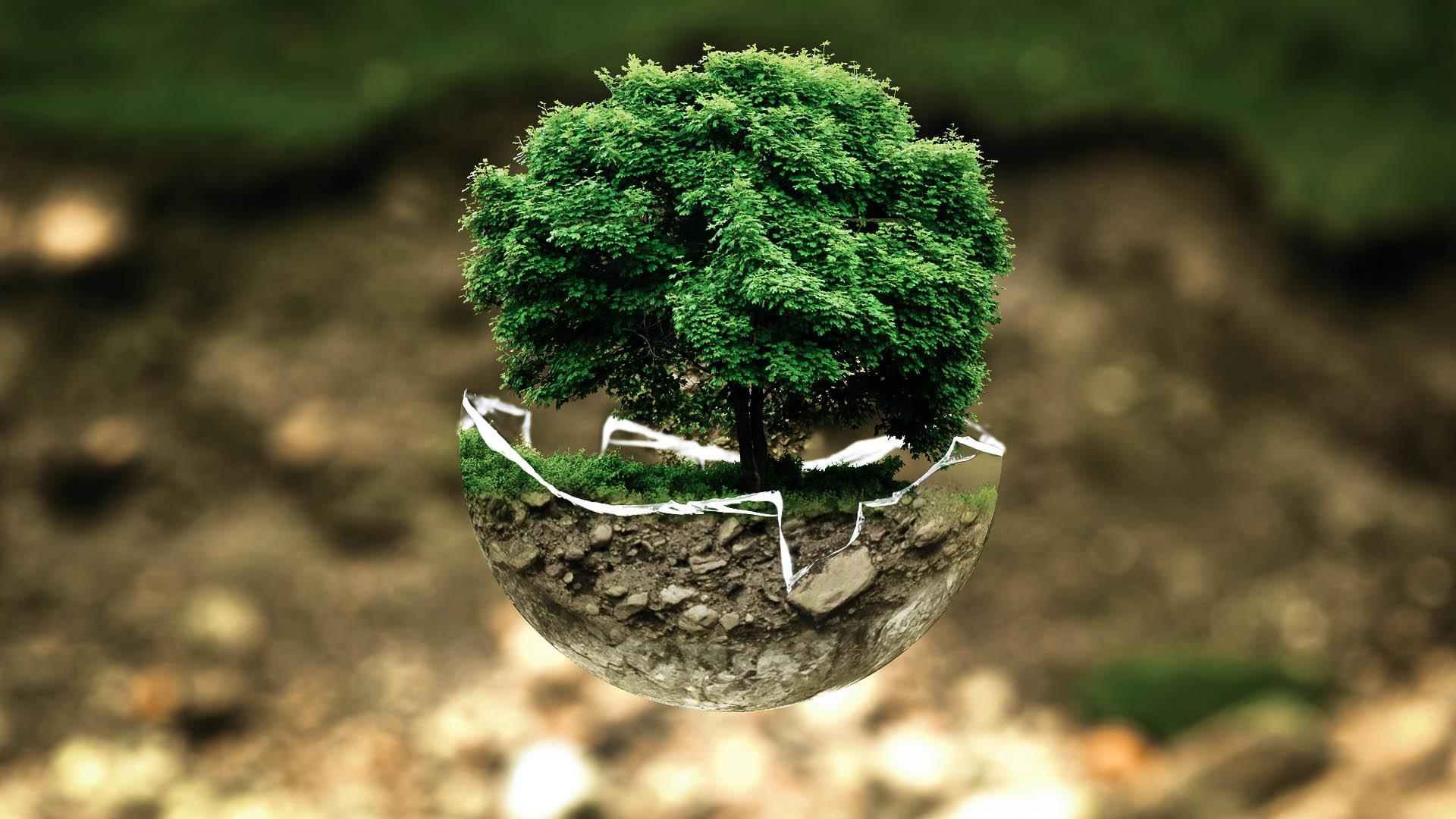 Baum Umweltschutz